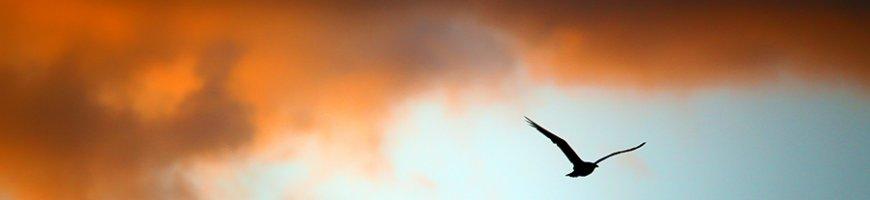 istambul-cerul-incepe-sa-ia-foc