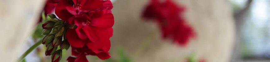 flori-cu-stupi
