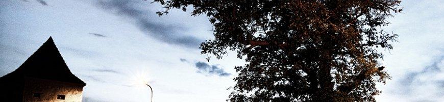 un-copac-singur-in-noapte