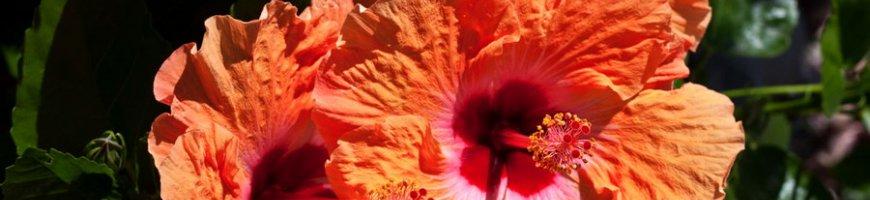 flowers-4121ew
