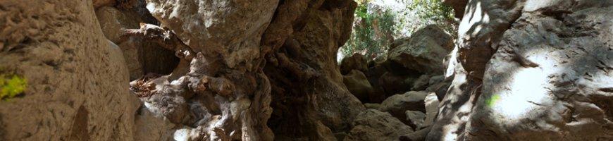 trekking-2434ewb
