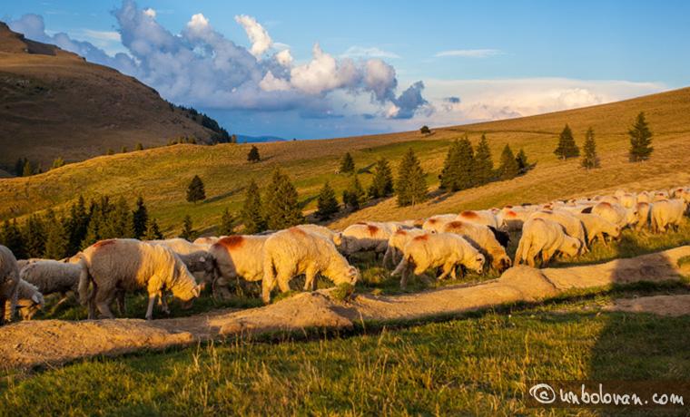 Spre apus, noi, oile, ciobanul e în umbră