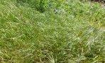 gary-lewis-the-playboys-green-grass_8533ewr
