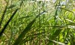 gary-lewis-the-playboys-green-grass_8534ewr