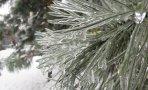 iarna-din-anotimpurile-vivaldi-03