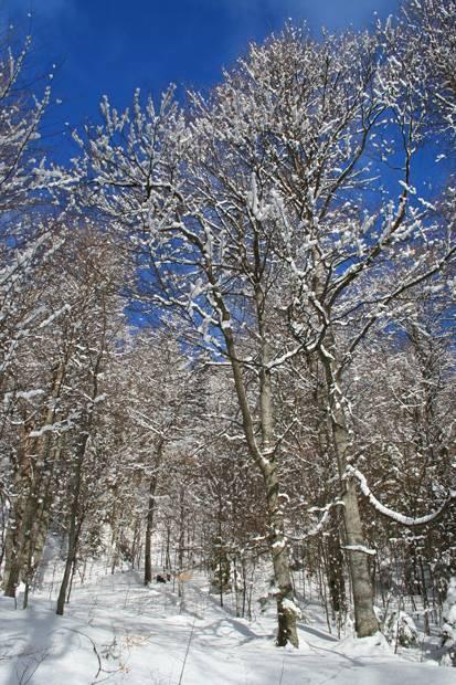iarna padure copaci cer albastru