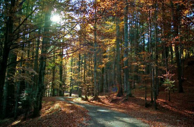 copaci toamna padure culori