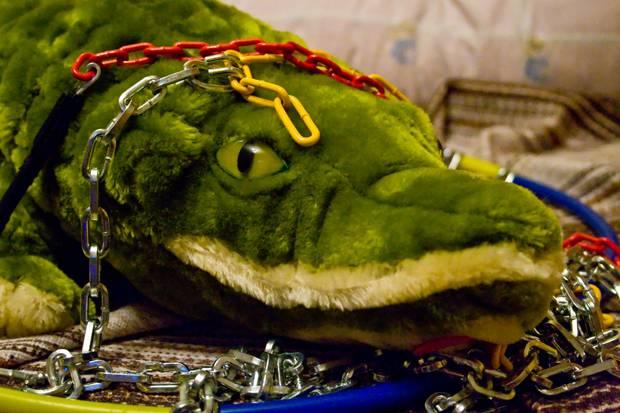 crocodil cu lanturi