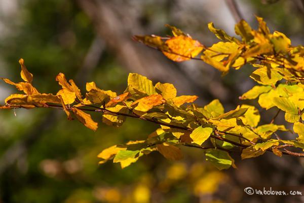 Culori de toamnă şi de weekend liniştit :)