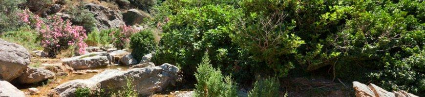 richtis-gorge-1285ew