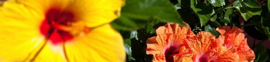 flowers-4120ew