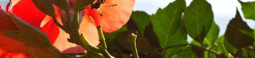 flowers-4155ew