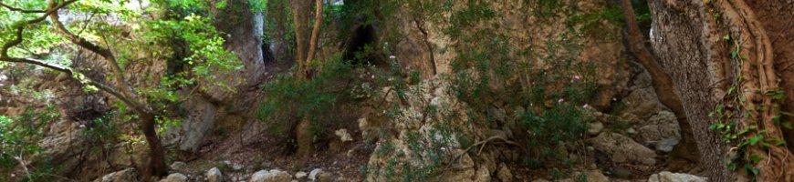 trekking-2410ewb