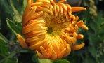 flori-frunze1