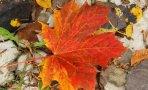 flori-frunze2
