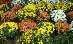 flori-frunze4