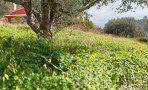 gary-lewis-the-playboys-green-grass_8520ewr