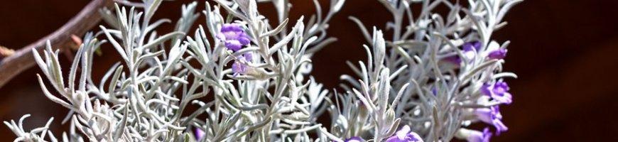 Strange plant_3409ew
