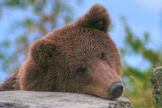 ...ursul frate cu bolovanul ...si cu sticla de cola?