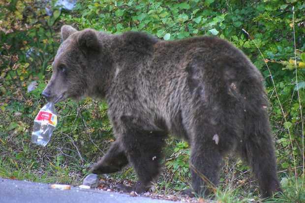 urs cersetor sinaia cu sticla de coca cola