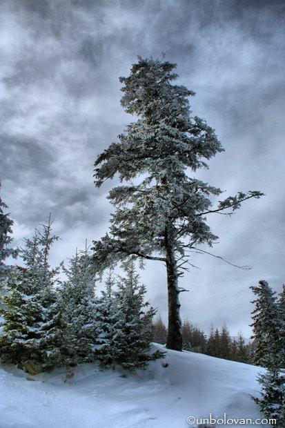 sinaia iarna zapada