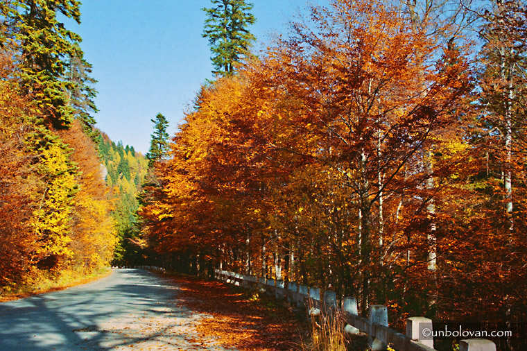 sinaia toamna sooare frunze colorate