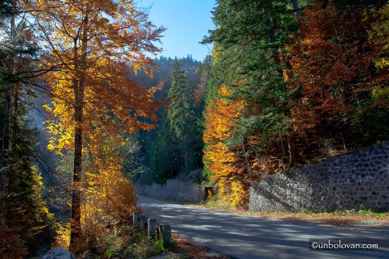 sinaia toamna padure frunze culori