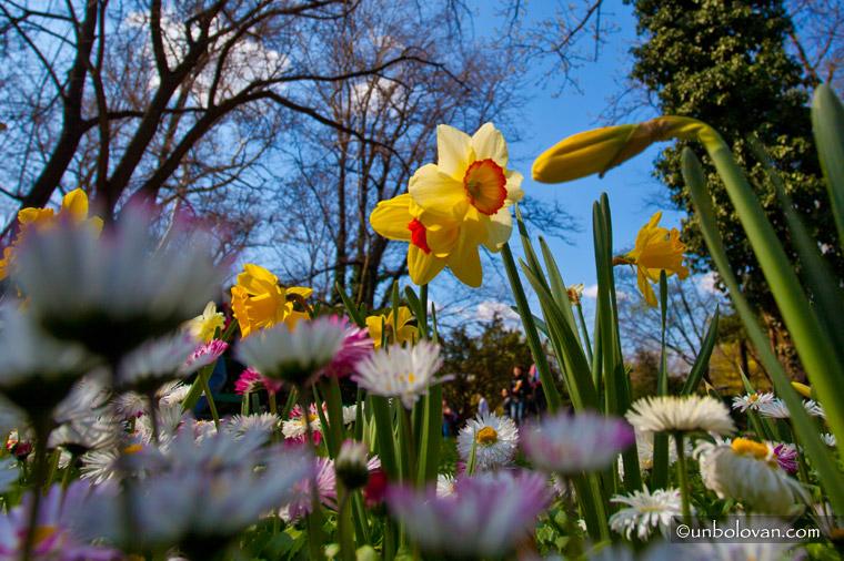 flori, floricele